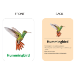 450 X 500 – BIRDS FRONT & BACK